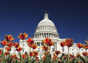 The United States Capitol building with freshly planted spring flowers in foreground.